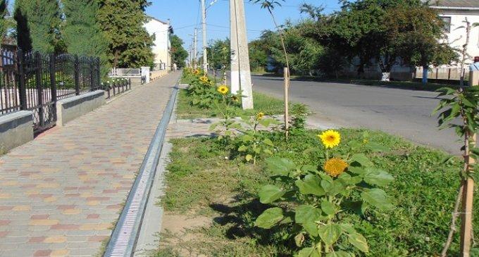 Головну вулицю Чопа затопило жовтогарячим цвітом