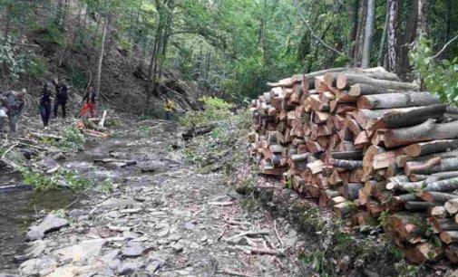 Поліція розслідує незаконну вирубку лісу