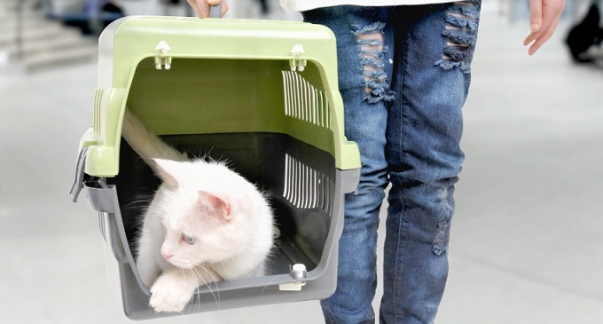 Про перевезення через кордон тварин – що закарпатцям треба знати
