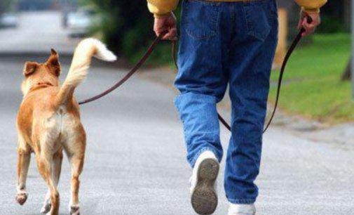Собака герой не покинув свого господаря у біді