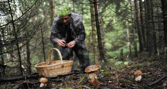 На Закарпатті шукали заблукалих грибників: подробиці від рятувальників