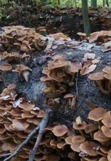 """У Карпатах закарпатські грибники знайшли грибовий """"клондайк"""" (ФОТО)"""