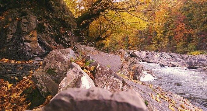 У соцмережі опублікували фото лісу на Закарпатті, через який протікає річка
