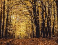 Осінь на Закарпатті (ФОТО)