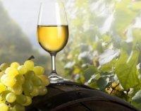 Особенности чилийских вин – рассказывают эксперты Алкомаг