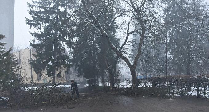 В Іршаві вивчили питання аварійності дерев
