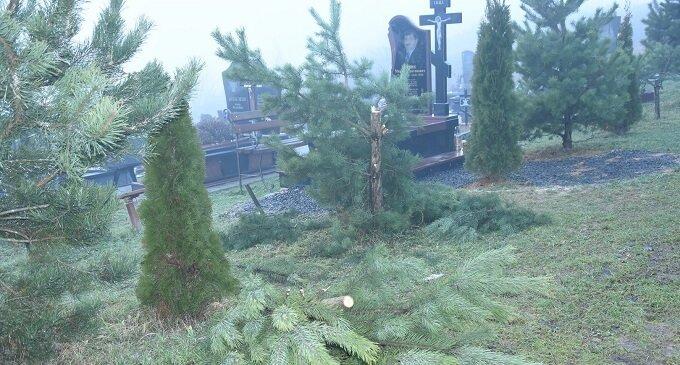 В Іршаві перед новим роком на кладовищі зрізали дві сосни