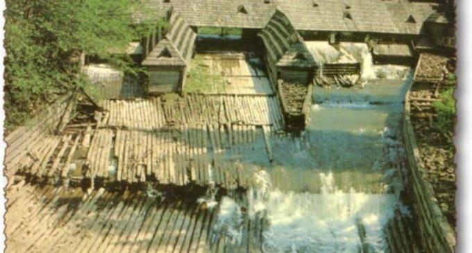 Закарпаттю виділили понад 53 мільйони на відновлення Музею лісу і сплаву