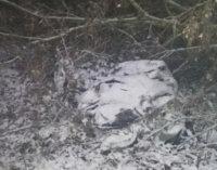Іноземець-заробітчанин вбив закарпатця, відтягнув тіло в ліс і приклав гілками