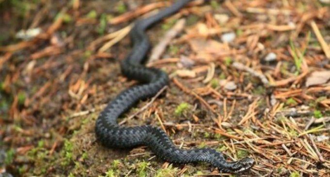У Карпатах від укусу змії померла дитина