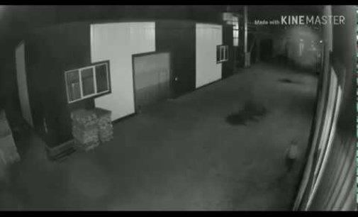 """В Ільниці пограбували підприємство """"К'Лен"""" (Відео)"""