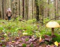 На Закарпатті 78-річного чоловіка, який пішов до лісу за грибами, знайшли мертвим