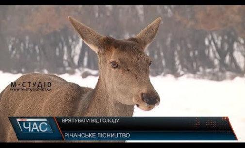 На Іршавщина лісники спасають оленів та косуль від голоду і холоду