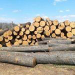 Деревину Закарпаття продаватимуть через Prozorro