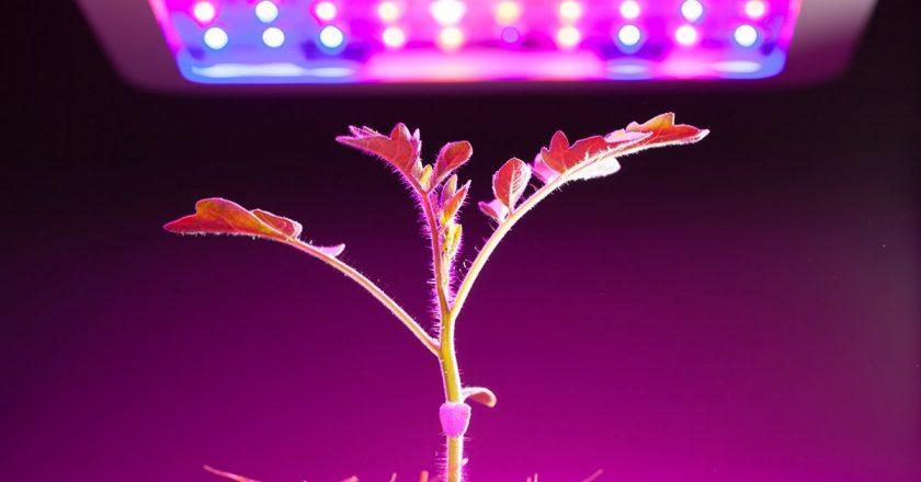 Как правильно использовать фитолампы и чему они способствуют? – агромагазин «Kapelka.com.ua»